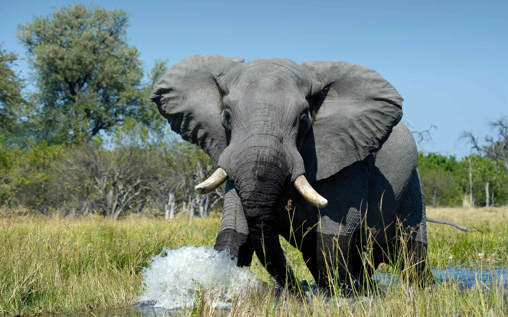 experiences-safaris-header