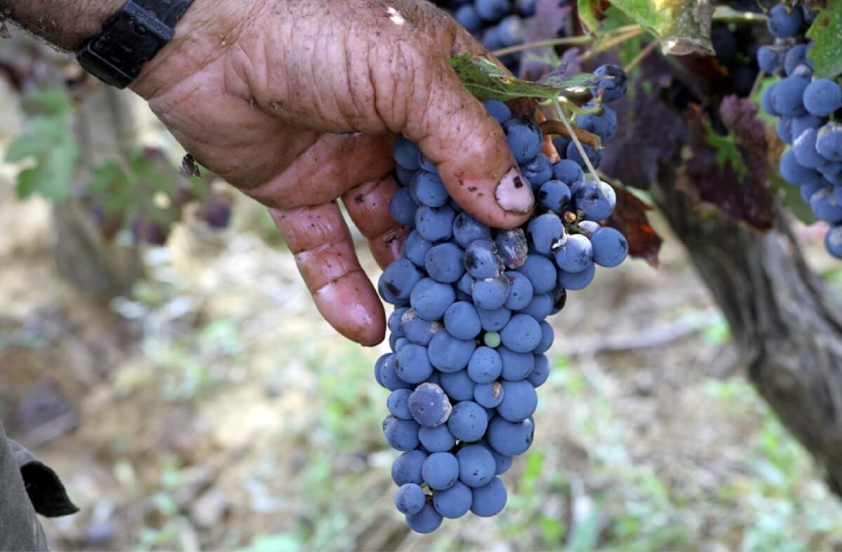 diaporama fine_wine-2