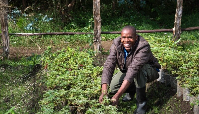 On the footsteps of Dian Fossey