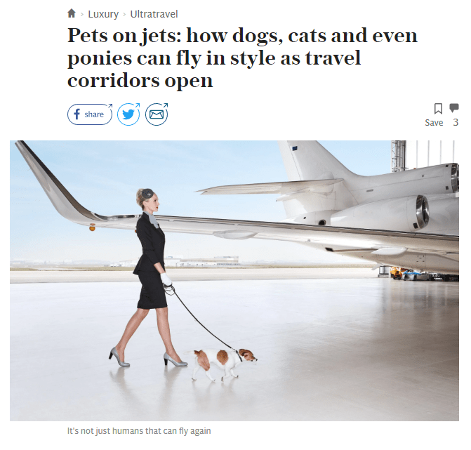 Pets on jets: how dogs, cats and even ponies can fly in style as travel corridors open